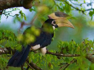 bundala-national-park-sri-lanka-hayalanka