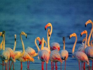 bundala-national-park-srilanka-hayalanka