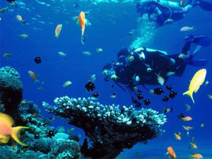 diving-and-snorkeling-in-sri-lanka-hayalanka