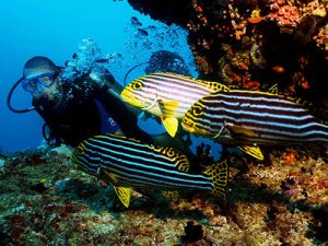 diving-and-snorkeling-in-srilanka-haya-lanka
