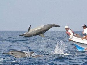 dolphin-watching-hayalanka