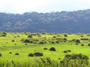 horton-plains-national-park-hayalanka