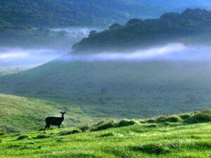 horton-plains-national-park-hayalanka-srilanka