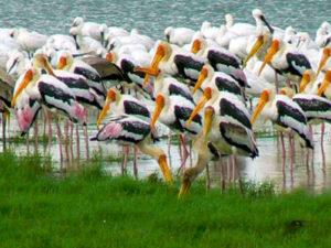 minneriya-national-park-haya-lanka-sri-lanka