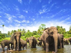 pinnawala-elephantorphanage-haya-lanka