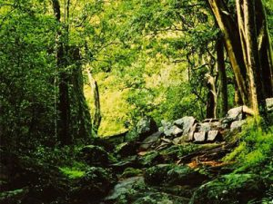 sinharaja-rain-forest-hayalanka