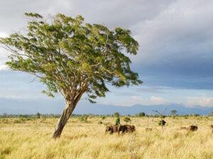 udawalawa-national-park-haya-lanka-srilanka