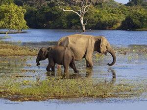 yala-national-park-haya-lanka-srilanka
