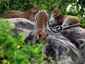 yala-national-park-hayalanka