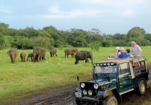 Yala Jeep Safari